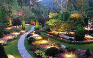 Flower-count-in-Victoria-in-February-Butchart-gardens-at-night-300x188